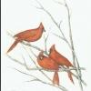 cardinalschristmas2010adj
