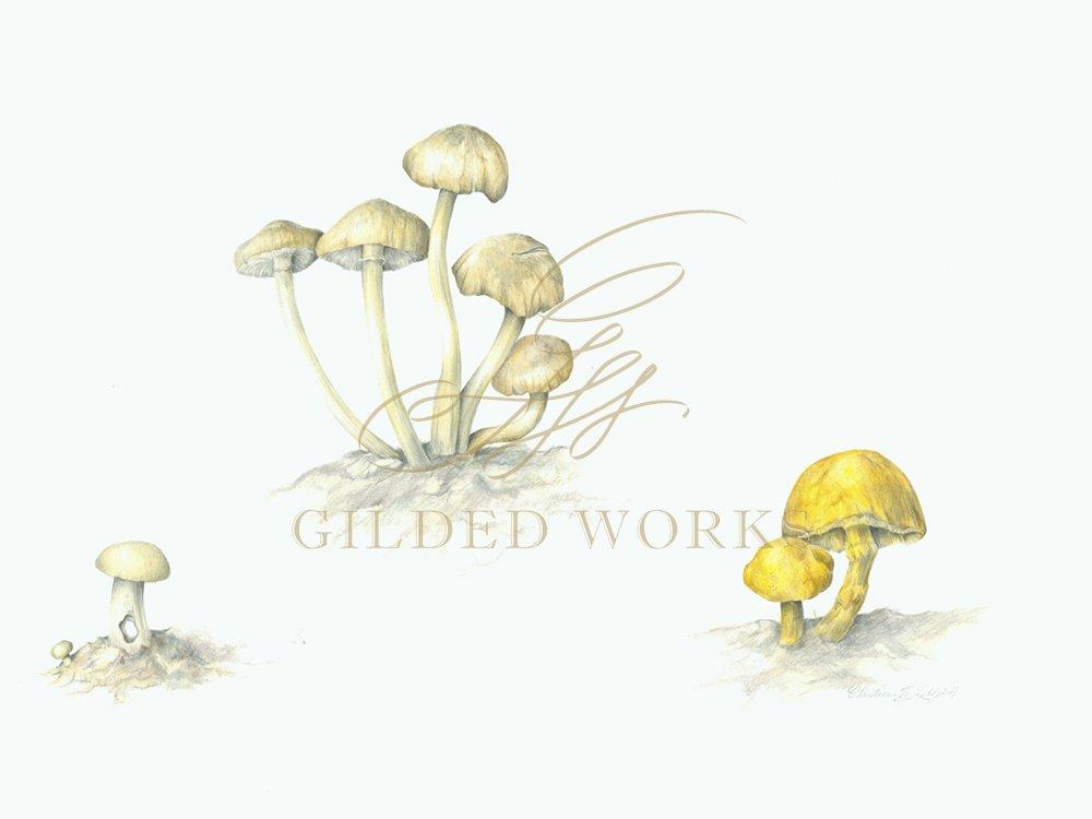 mushroomleddy2adj