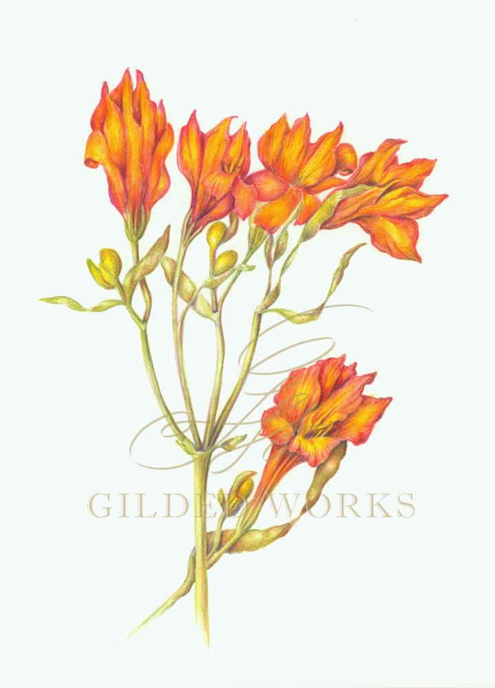 orangelily