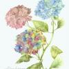 artwork-006
