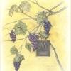 grapesadj1