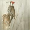 woodpeckeradj